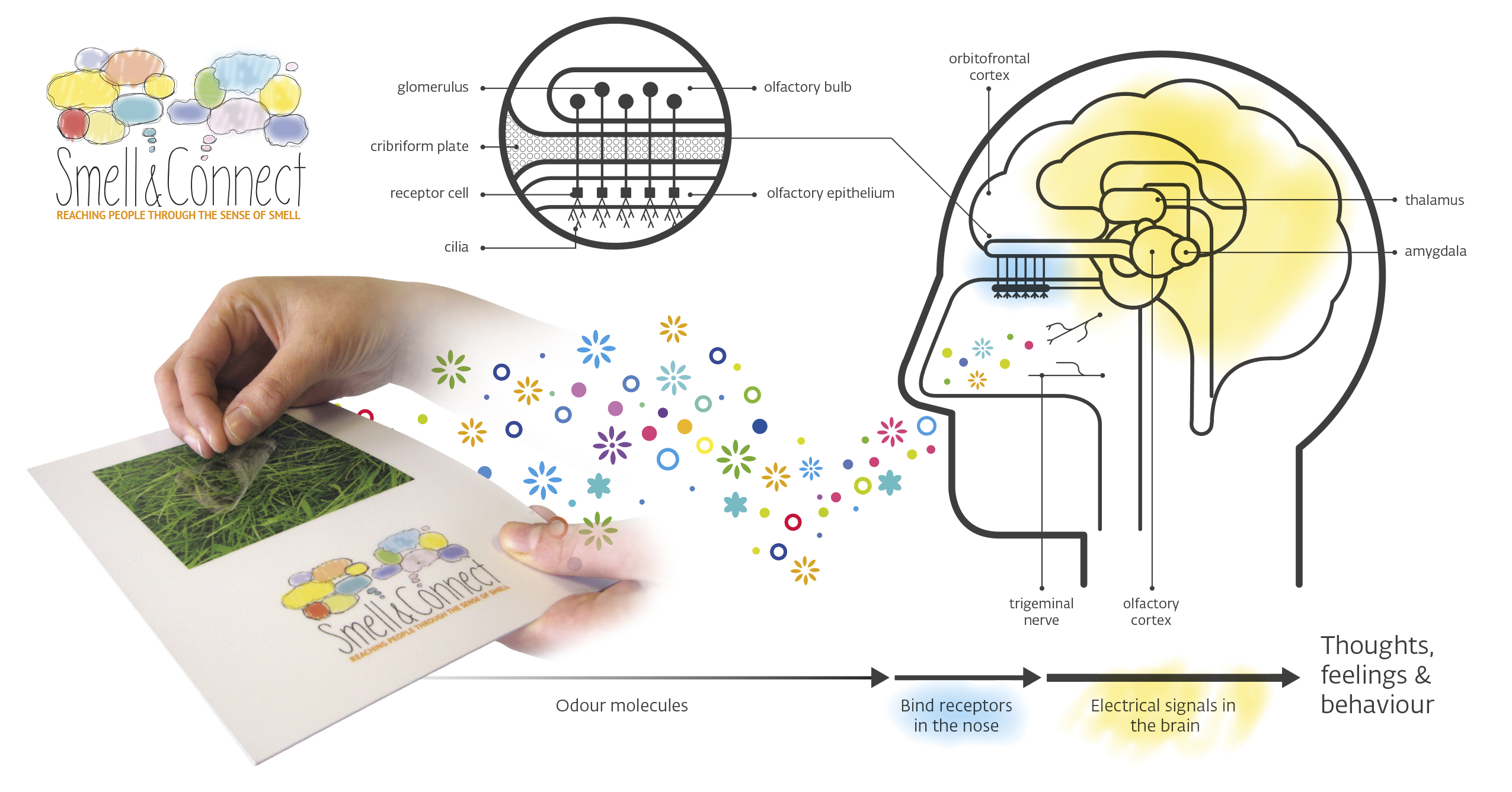Brain pic - Thoughts_feelings_behaviour